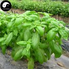 Buy Sweet Basil Herb Seeds 200pcs Plant Herba Ocimi For Ocimum Basilicum Luo Le
