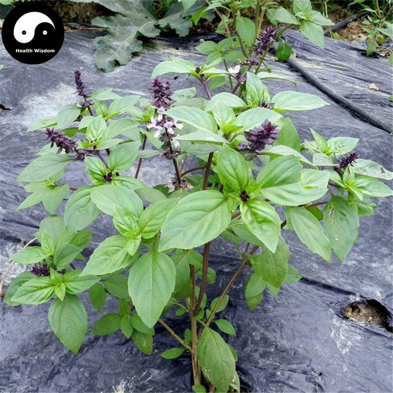 Buy Clove Basil Herb Seeds 200pcs Plant Ocimum Gratissimum For Luo Le