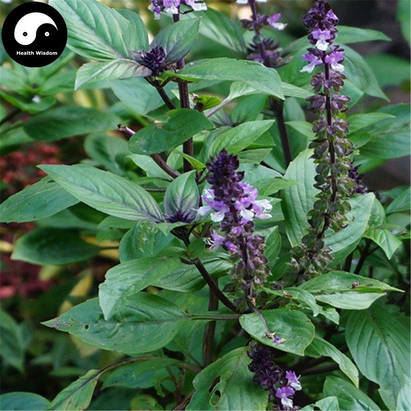 Buy Clove Basil Herb Seeds 400pcs Plant Ocimum Gratissimum For Luo Le