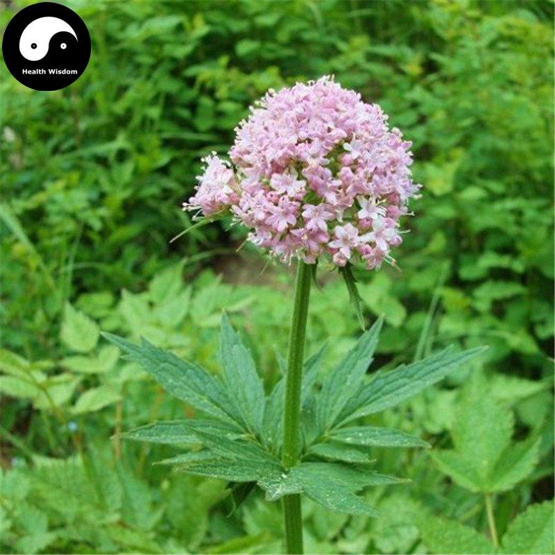 Buy Herba Valerianae Seeds 100pcs Plant Chinese Valerian Herb For Xie Cao
