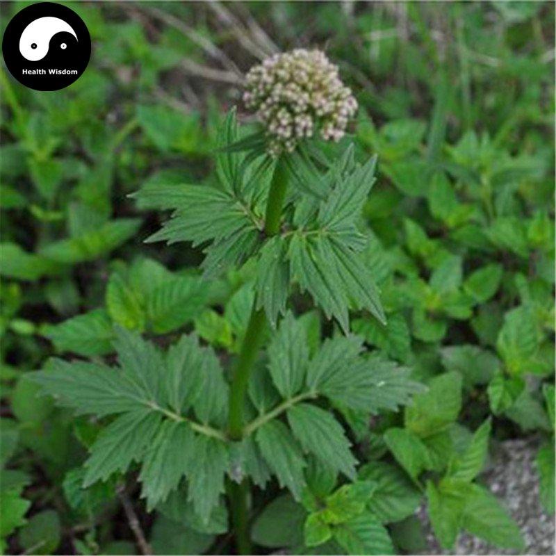 Buy Herba Valerianae Seeds 200pcs Plant Chinese Valerian Herb For Xie Cao