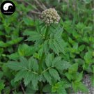 Buy Herba Valerianae Seeds 200pcs Plant Chinese Valerian Herb For Xie Cao