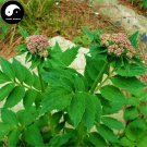 Buy Herba Valerianae Seeds 400pcs Plant Chinese Valerian Herb For Xie Cao