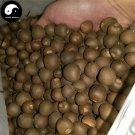 Buy Tieguanyin Tree Seeds 120pcs Plant Olong Tea Tie Guan Yin For Ti Kwan Yin