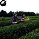 Buy Green Tea Tree Seeds 60pcs Plant Dong Ting Biluochun For Pi Luo Chun Cha