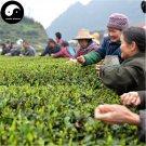 Buy Wuyi Black Tea Tree Seeds 120pcs Plant Wu Yi Black Tea For Lapsang Souchong