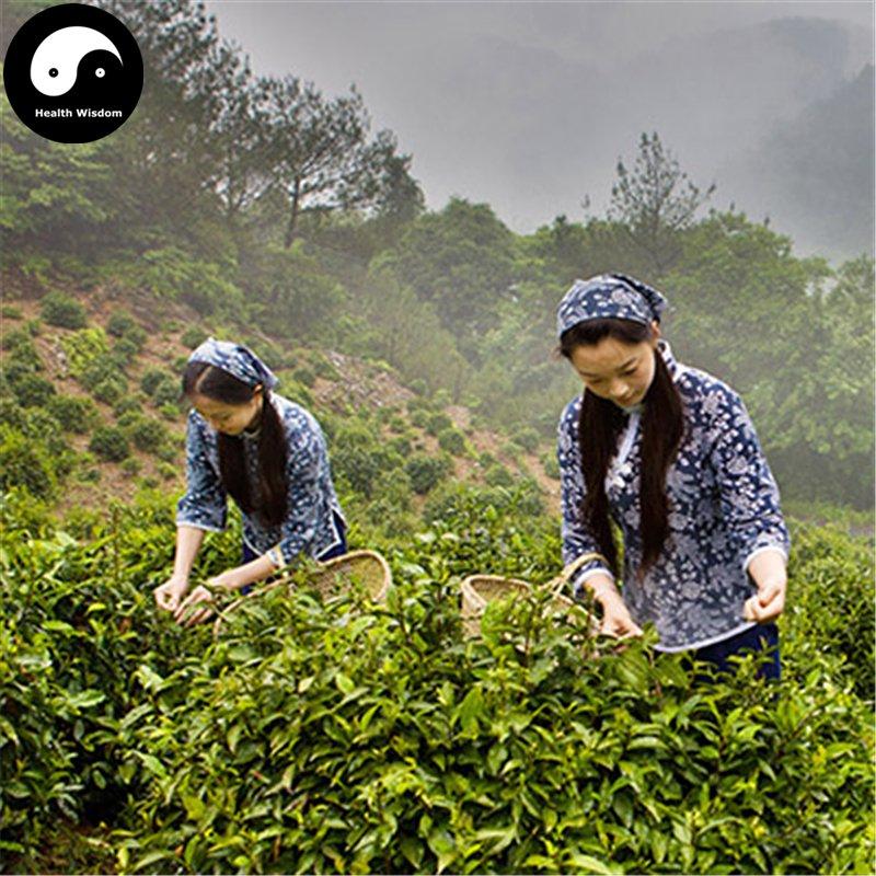 Buy Black Tea Tree Seeds 60pcs Plant Chinese Keemun Tea For Qi Men Hong Cha