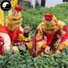 Buy Green Tea Tree Seeds 120pcs Plant Chinese Monkey Tea For Tai Ping Hou Kui