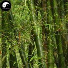 Buy Thorn Bamboo Tree Seeds 200pcs Plant Chimonobambusa Phyllostachys For Bamboo