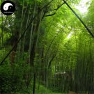 Buy Green Bamboo Tree Seeds 200pcs Plant Bamboo For Bamboo Shoots