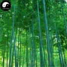 Buy Green Bamboo Tree Seeds 100pcs Plant Bamboo For Bamboo Shoots
