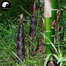 Buy Green Bamboo Tree Seeds 50pcs Plant Bamboo For Bamboo Shoots