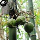 Buy Pear Bamboo Tree Seeds 60pcs Plant Melocanna Baccifera For Bamboo Garden