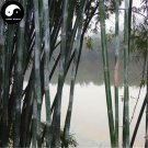 Buy Ci Bamboo Tree Seeds 60pcs Plant Chinese Bamboo For Bamboo Shoots