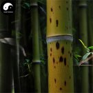Buy Ban Bamboo Tree Seeds 120pcs Plant Chinese Bamboo For Bamboo Garden