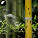 Buy Ban Bamboo Tree Seeds 60pcs Plant Chinese Bamboo For Bamboo Garden