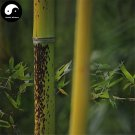 Buy Ban Bamboo Tree Seeds 30pcs Plant Chinese Bamboo For Bamboo Garden
