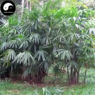 Buy Guanyin Bamboo Tree Seeds 60pcs Plant Chinese Bamboo For Bamboo Garden