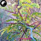 Buy Thistles And Thorns Tree Seeds 400pcs Plant Vine Tree Fence Thorns Jing Ji