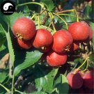 Buy Hawthorn Fruit Tree Seeds 120pcs Plant Hawthorn Berry May Tree For Shan Za