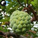 Buy Annona Squamosa Fruit Tree Seeds 30pcs Plant Sweetsop For Custard Apple