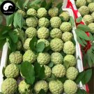 Buy Annona Squamosa Fruit Tree Seeds 120pcs Plant Sweetsop For Custard Apple