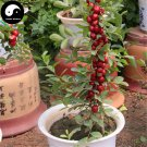 Buy Dwarf Cherry Fruit Tree Seeds 60pcs Plant Cerasus Humilis For Calcium Fruit