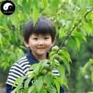 Buy Peach Fruit Tree Seeds 20pcs Plant Peaches For Chinese Fruit Tao