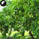 Buy Peach Fruit Tree Seeds 80pcs Plant Peaches For Chinese Fruit Tao