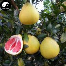 Buy Grapefruit Tree Seeds 100pcs Plant Citrus Maxima For Grapefruit Chinese You
