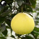 Buy Grapefruit Tree Seeds 25pcs Plant Citrus Maxima For Grapefruit Chinese You