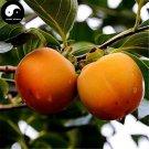 Buy Persimmon Fruit Tree Seeds 30pcs Plant Diospyros Kaki For Chinese Fruit Shi