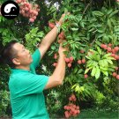 Buy Litchi Fruit Tree Seeds 120pcs Plant Litchi Chinensis For Lychee Li Zhi