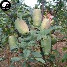 Buy Chaenomeles Speciosa Fruit Tree Seeds 60pcs Plant Floweringquince For Mu Gua