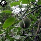 Buy Bitter Orange Tree Seeds 60pcs Plant Citrus Aurantium For Aurantii Zhi Qiao