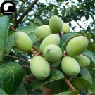 Buy White Olive Tree Seeds 6pcs Plant Green Olive Tree For Fruit Gan Lan