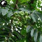Buy White Olive Tree Seeds 24pcs Plant Green Olive Tree For Fruit Gan Lan