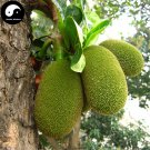 Buy Jackfruit Tree Seeds 6pcs Plant Pineapple Tree For Sweet Fruit Jackfruit