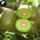 Buy Kiwi Fruit Tree Seeds 240pcs Plant Actinidia Chinensis For Fruit Kiwi