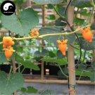 Buy Eggplant Seeds 60pcs Plant Ornamental Solanum Mommosum Bonsai