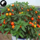 Buy Solanum Pseudocapsicum Tree Seeds 120pcs Plant Ornamental Orange Fruit Bonsai