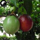 Buy Passiflora Fruit Tree Seeds 120pcs Plant Purple Passiflora For Eggs Fruit