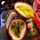 Buy Passiflora Fruit Tree Seeds 60pcs Plant Purple Passiflora For Eggs Fruit