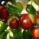 Buy Chinese Date Fruit Tree Seeds 50pcs Plant Ziziphus Jujuba For Sweet Jujube