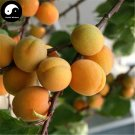 Buy Apricot Fruit Tree Seeds 50pcs Plant Armeniaca Vulgaris For Chinese Xing
