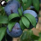 Buy Purple Plum Fruit Seeds 50pcs Plant Prunus Salicina For Chinese Fruit Li