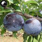 Buy Purple Plum Fruit Seeds 25pcs Plant Prunus Salicina For Chinese Fruit Li