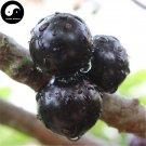 Buy Jaboticaba Fruit Seeds 30pcs Plant Tree Grapes For Chinese Jabuticaba