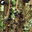 Buy Jaboticaba Fruit Seeds 60pcs Plant Tree Grapes For Chinese Jabuticaba