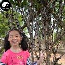 Buy Jaboticaba Fruit Seeds 120pcs Plant Tree Grapes For Chinese Jabuticaba